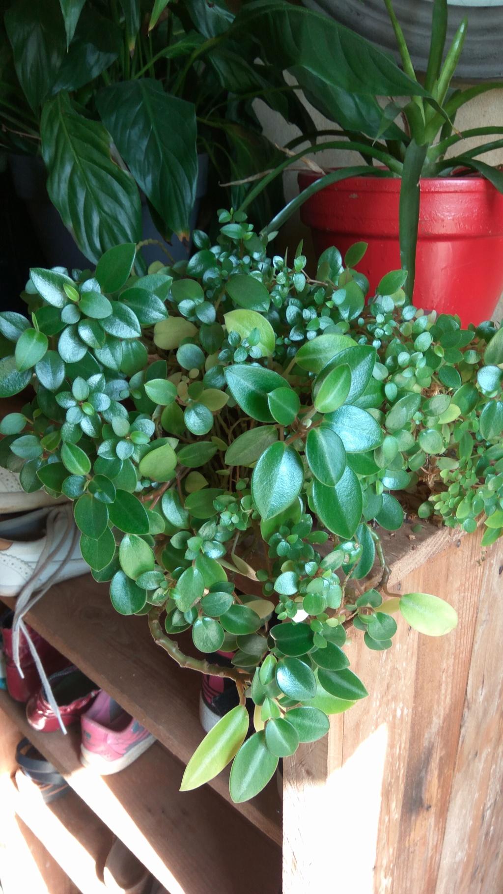 Nom de cette magnifique plante Plante11