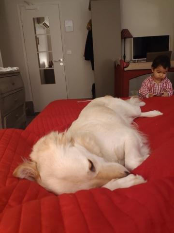 GYPSY (ex FELICIE) - Magnifique maman courage fatiguée, croisée de taille moyenne, née environ en décembre 2014 - REMEMBER ME LAND - Adoptée par Emily (13)  - Page 7 Inboun18