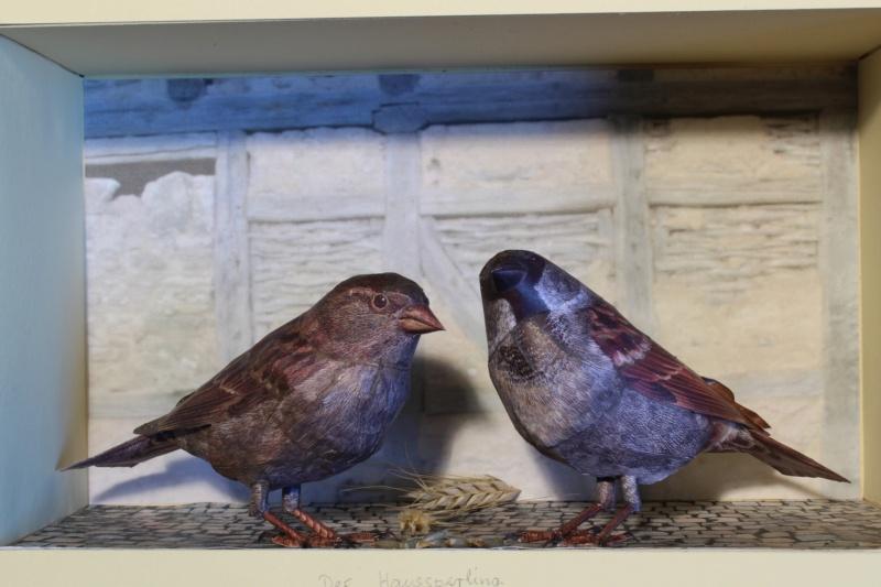Unser Vogelpark Haussp10