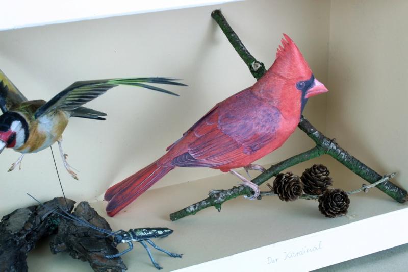 Unser Vogelpark Kardin11
