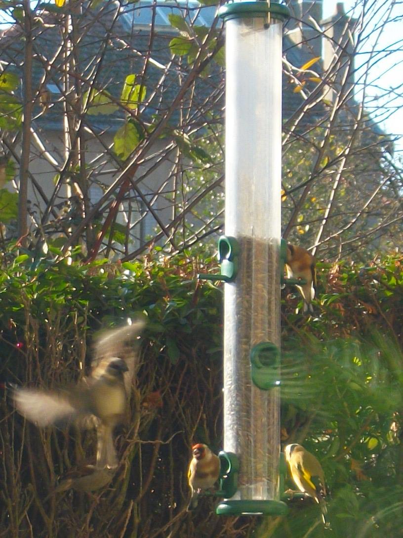 Les oiseaux de nos jardins - Page 3 Imgp2410