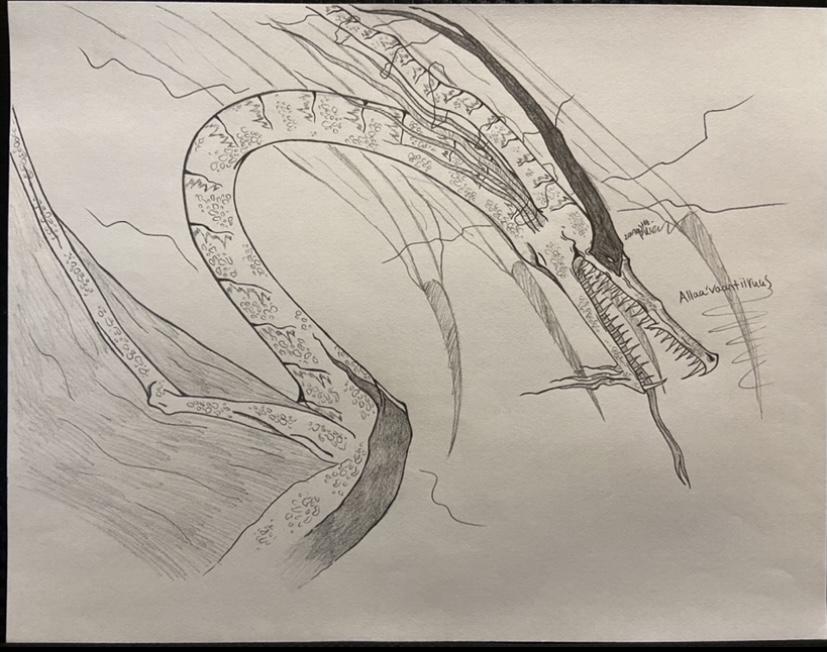 Drakk'aaniiuun Drawings! 16e4b710