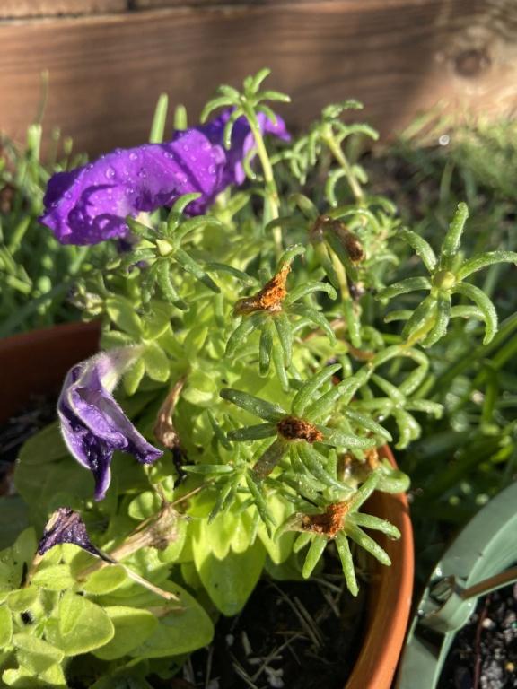 The Gardening Thread Ca843b10