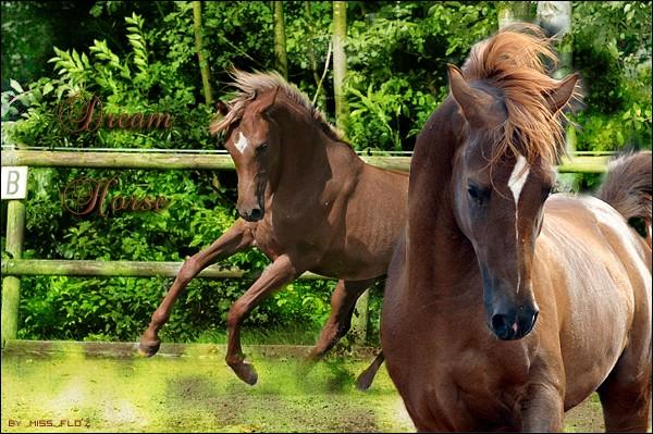 · Dream-Horse ·