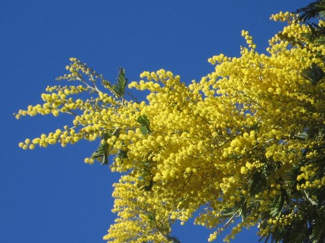Le printemps...on s'y croirait presque!!! Img_0699