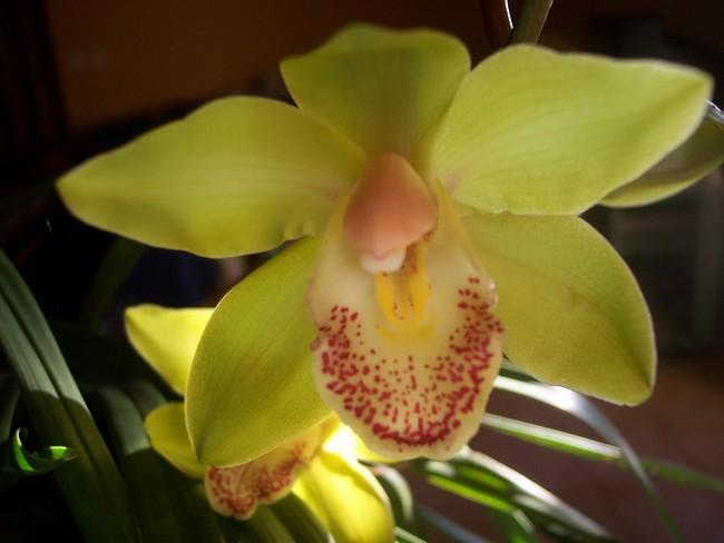 Orchidées Orchid10
