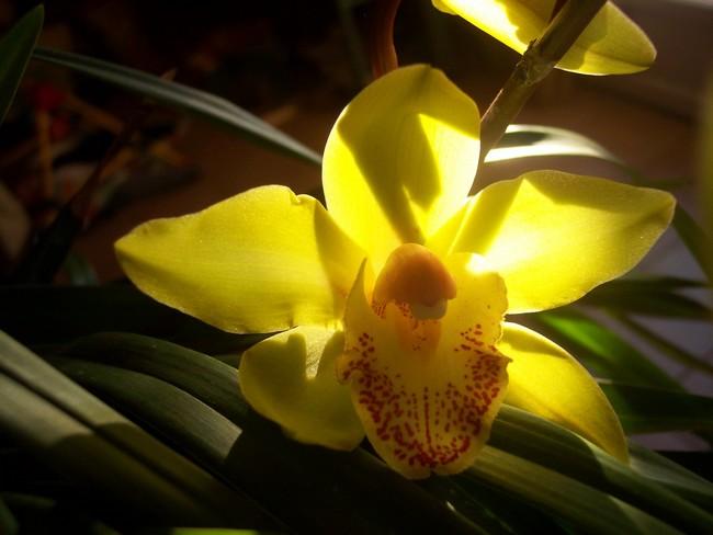Orchidées Orchid13