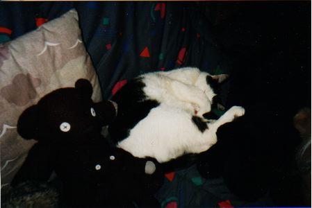 Photos cache-cache neu-neuilles avec papattes Gwen_h10