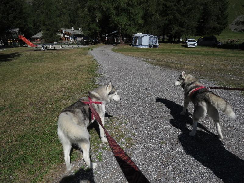 Falco et Fiona en Savoie 01_fal13