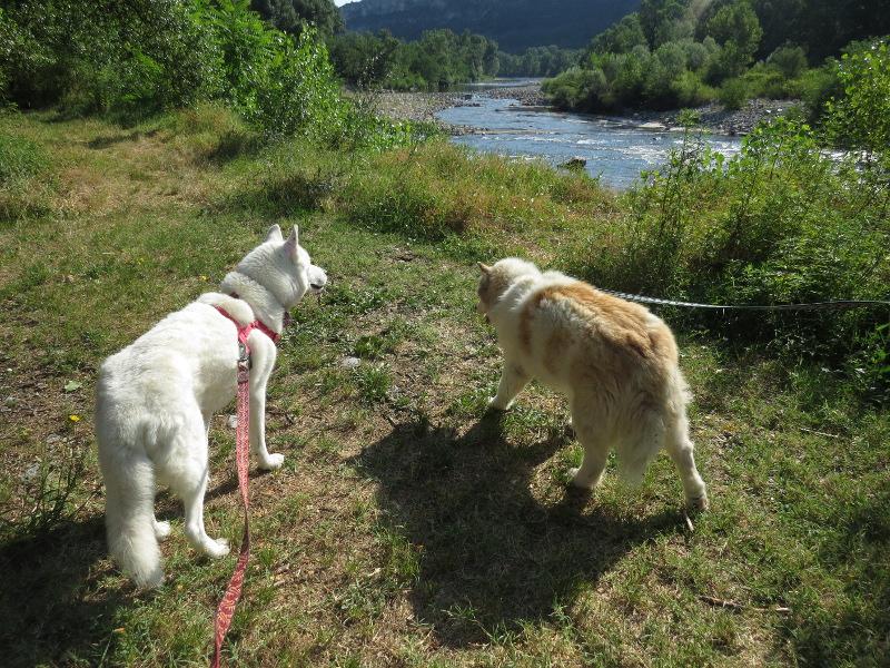 Yocco et Anook dans les Alpes 01_yoc11