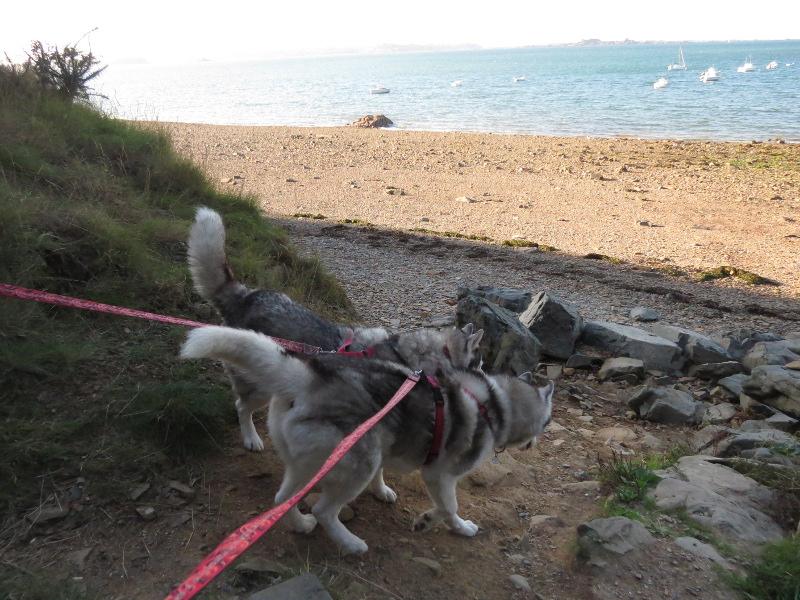 Falco et Fiona en Bretagne 02_cam10