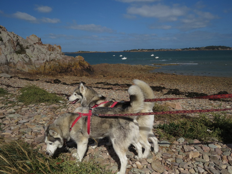Falco et Fiona en Bretagne 04_fio12