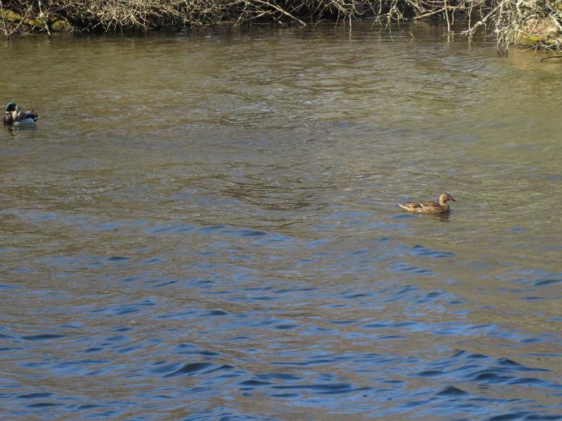 Falco et Fiona au Lac Chambon 08_can10