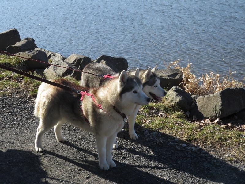 Falco et Fiona au Lac Chambon 11_fal10