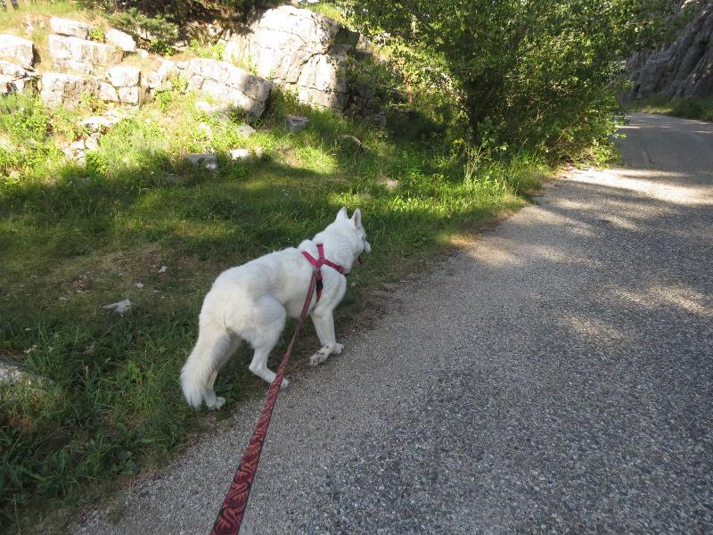 Yocco et Anook dans les Alpes 11_yoc11