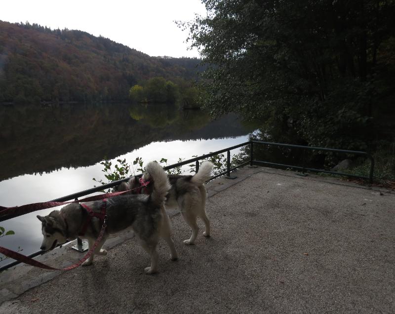 Falco et Fiona au Lac Chambon 13_fio10
