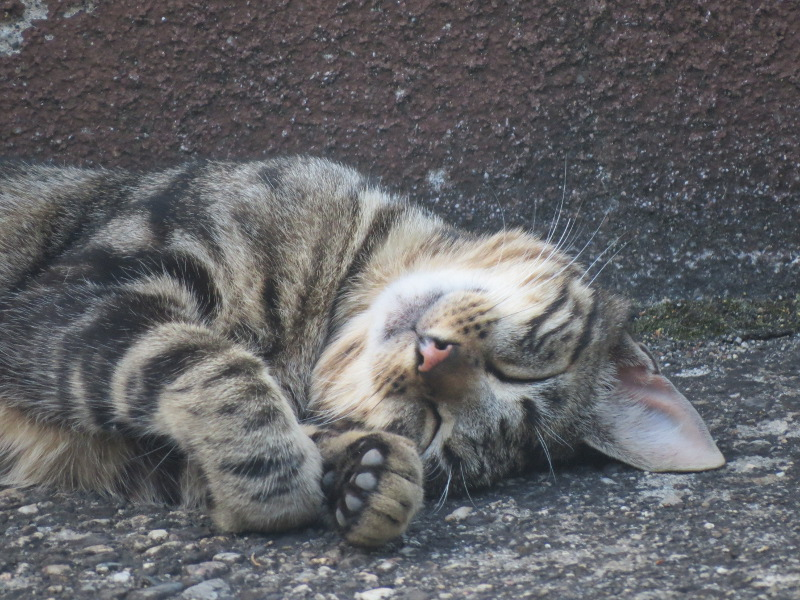 """""""Mes"""" chats ... - Page 3 146_3010"""