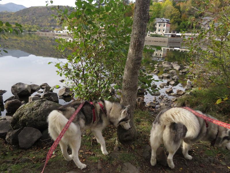 Falco et Fiona au Lac Chambon 14_fal13