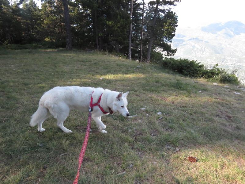 Yocco et Anook dans les Alpes 15_yoc10