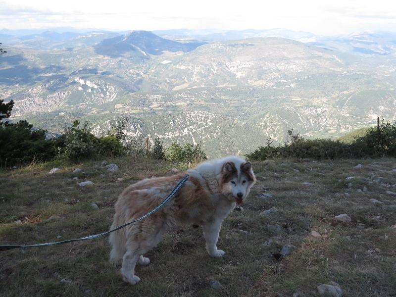 Yocco et Anook dans les Alpes 16_ano10