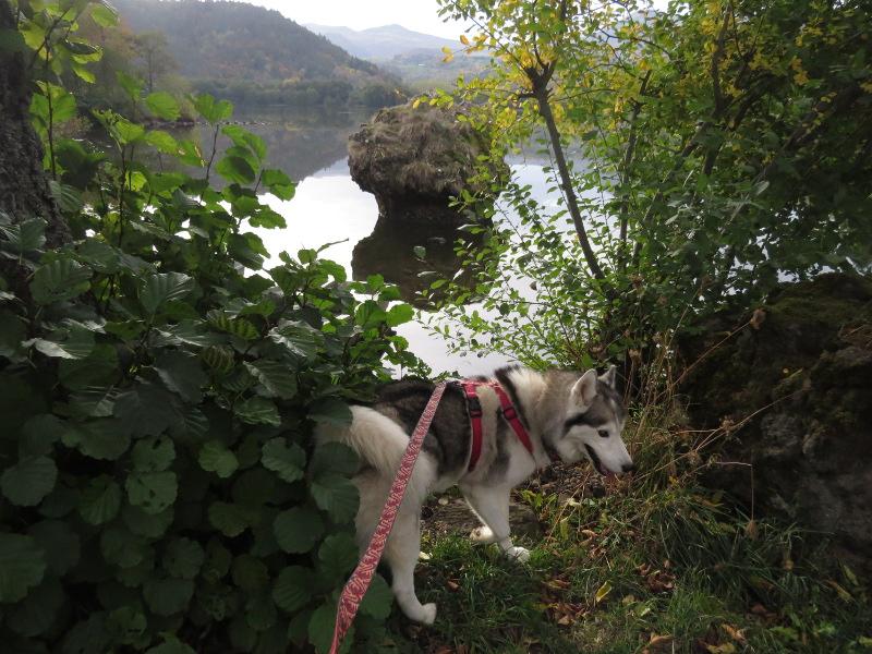 Falco et Fiona au Lac Chambon 17_fal13