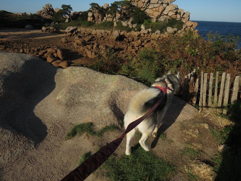 Falco et Fiona en Bretagne 18_fal10