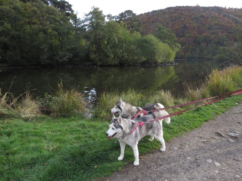 Falco et Fiona au Lac Chambon 18_fal12