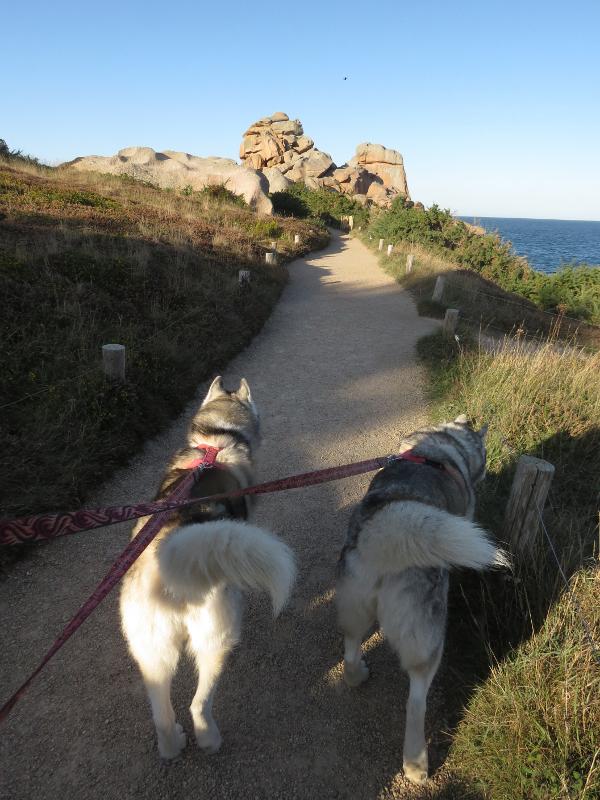 Falco et Fiona en Bretagne 19_fal12