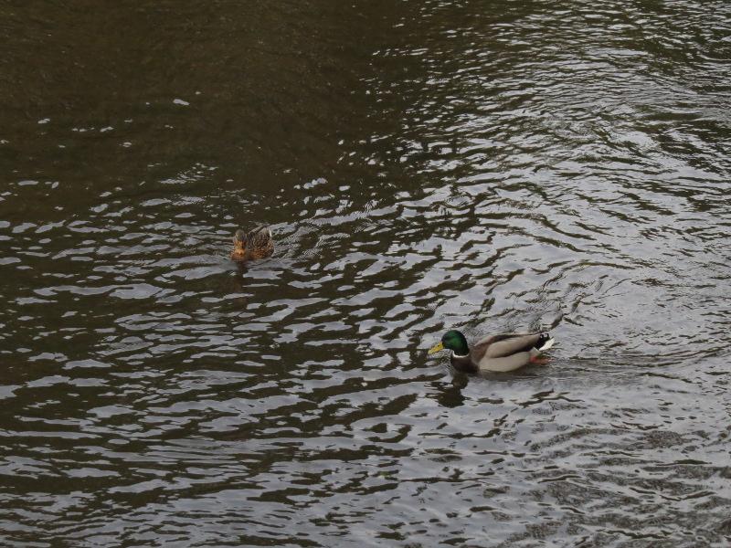Falco et Fiona au Lac Chambon 21_can10