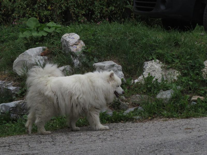 Falco et Fiona en Savoie 25_sam10