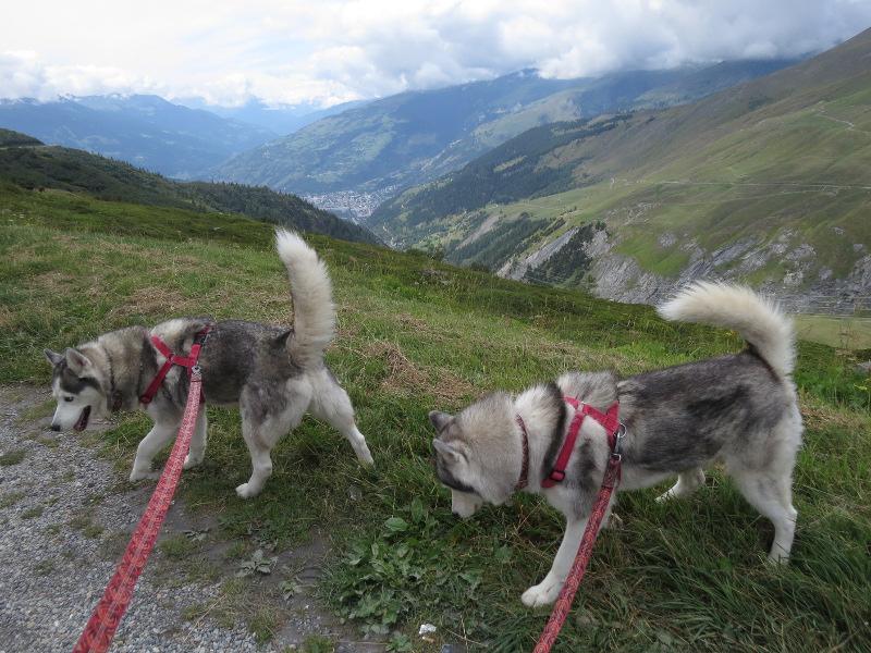 Falco et Fiona en Savoie 27_fio11