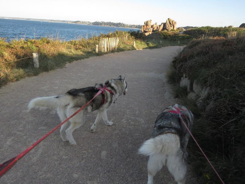 Falco et Fiona en Bretagne 28_fal10