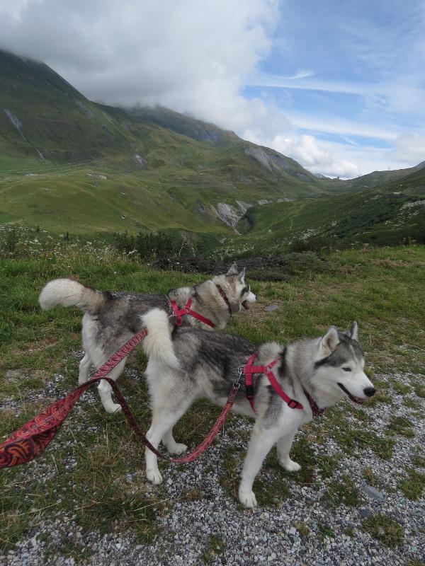 Falco et Fiona en Savoie 28_fio10