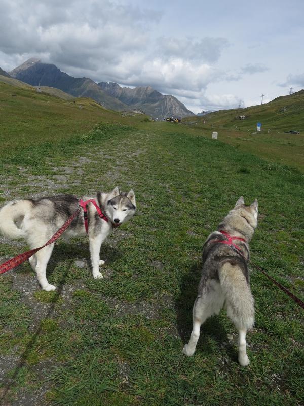 Falco et Fiona en Savoie 31_fal10