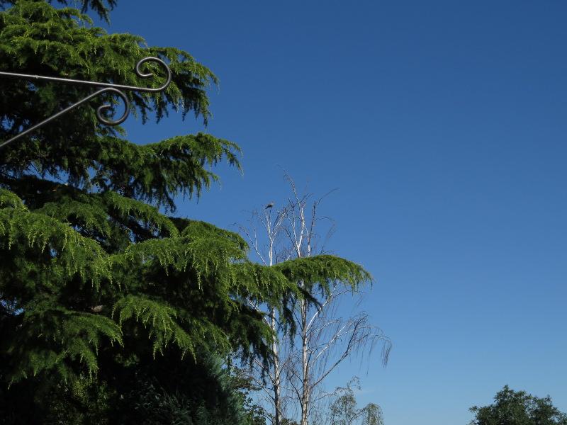 Les oiseaux du jardin 32_12_10