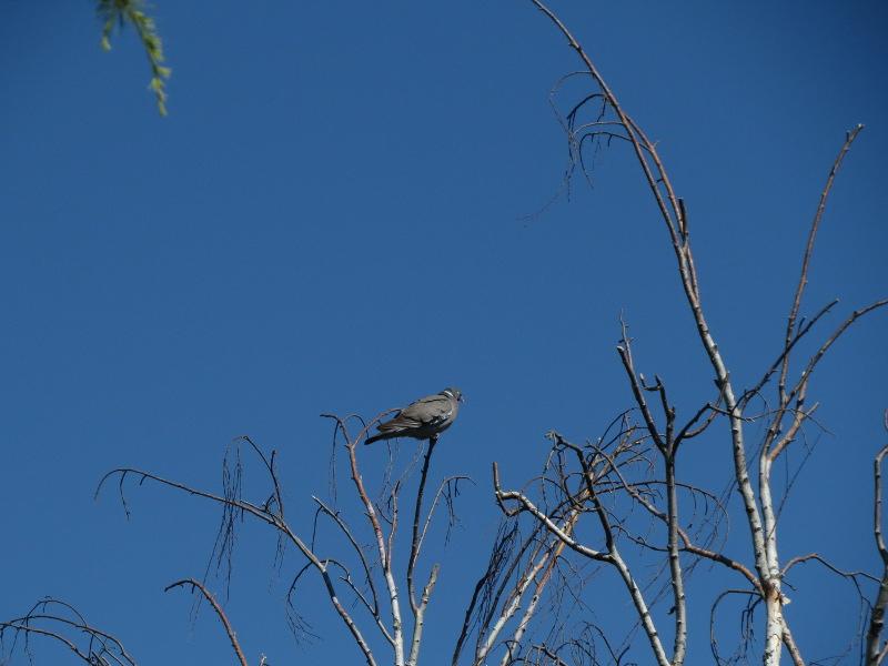 Les oiseaux du jardin 33_12_10
