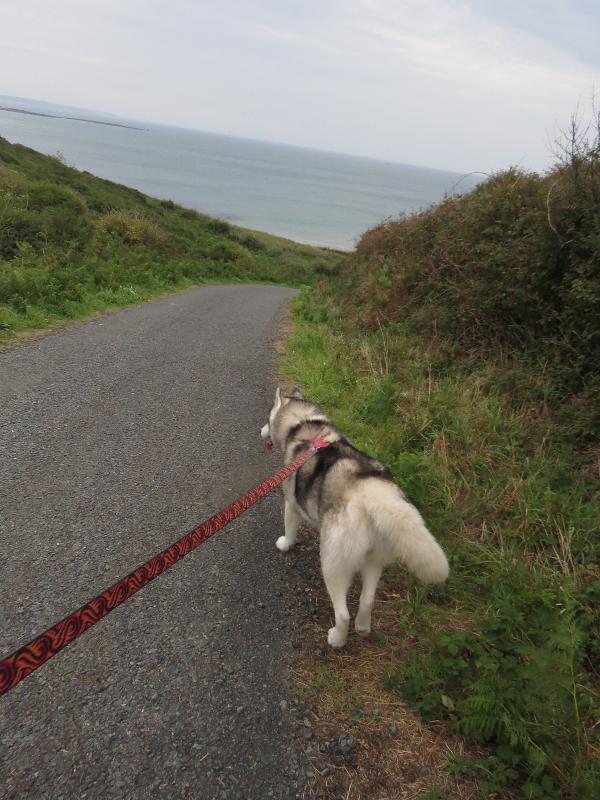 Falco et Fiona en Bretagne 33_fal10