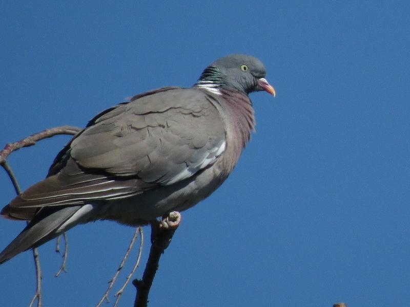 Les oiseaux du jardin 34_12_10