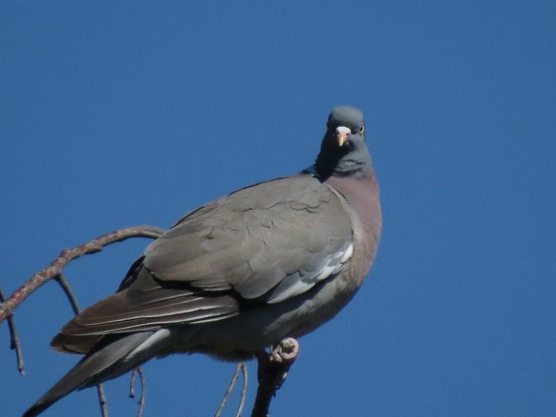Les oiseaux du jardin 35_12_10