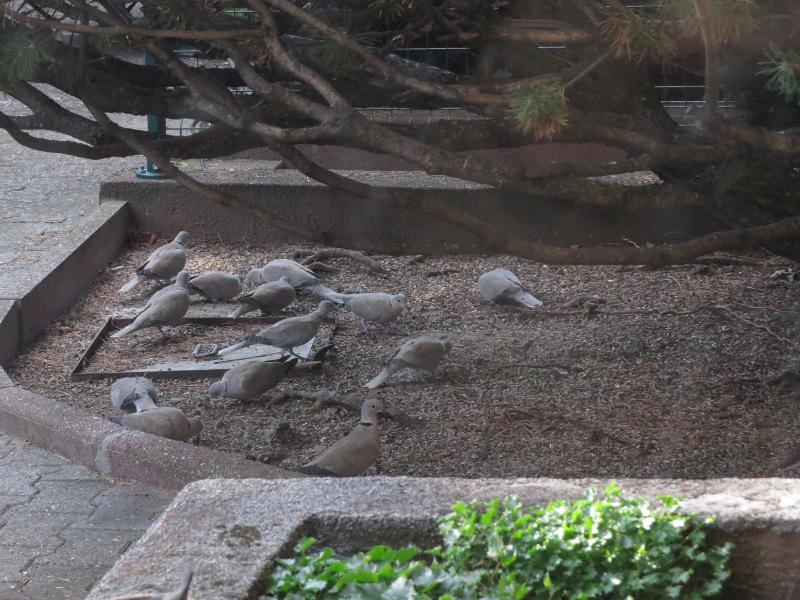 Les oiseaux du jardin 37_13_10