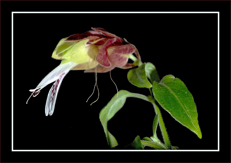 PhotoCritik - Portail Plante10