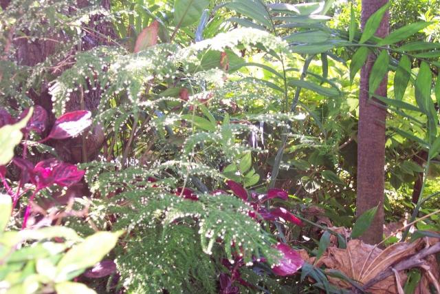 Broméliacées en fleurs dans le jardin Aspara10