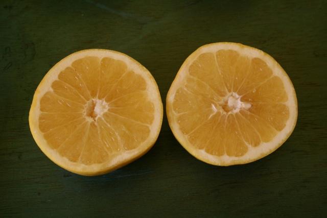 Aié, les Agrumes, c'est parti Citrus18