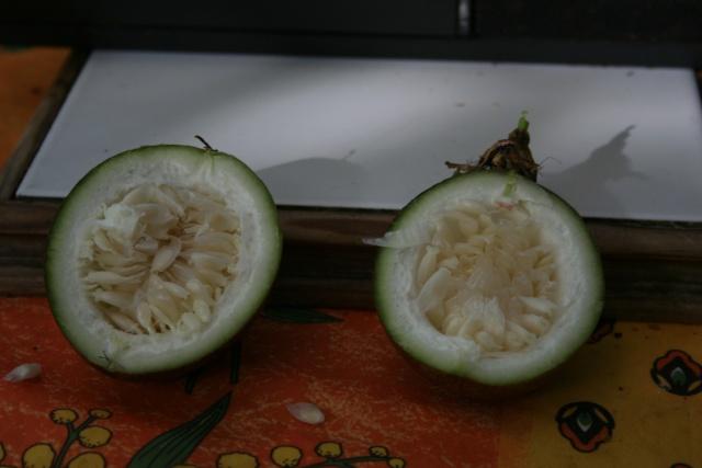 Les agrumes, c'est bientot Fruit_10