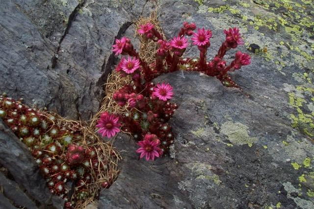 La plante d'aujourd'hui... Parlant de cactus et succulentes no cactacées Lac_de10