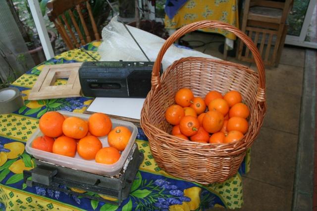 Marmelade et fruits confits Orange11