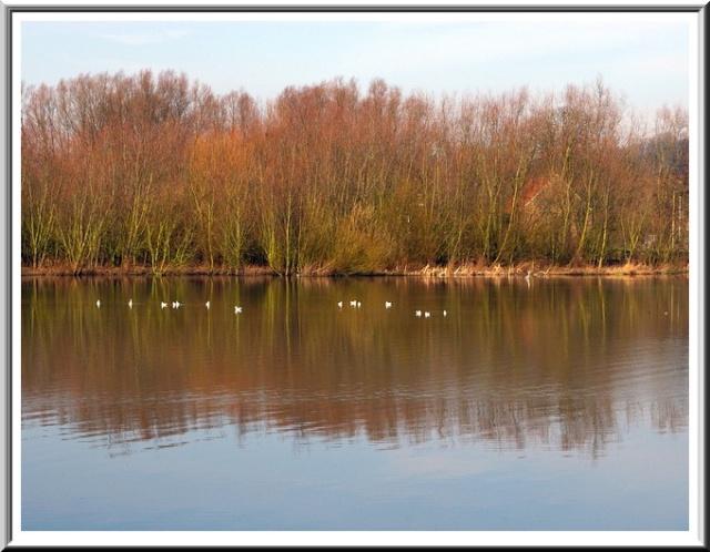 Le parc de Neerpede Anderlecht Bruxelles Sg1l1739