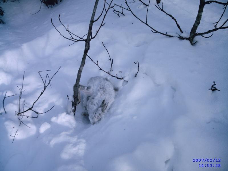 Colletage cet hiver - Page 2 Sunp0023
