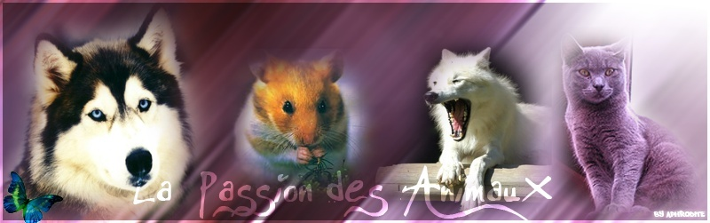 Animaux Passion