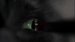 Masters of Horror : Saison 2 (2006, Réalisateurs Multiples) - Page 3 Vlcsn106